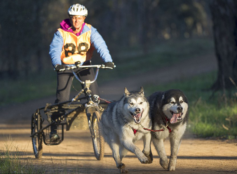 Australian-dog-sled-race-Shepparton