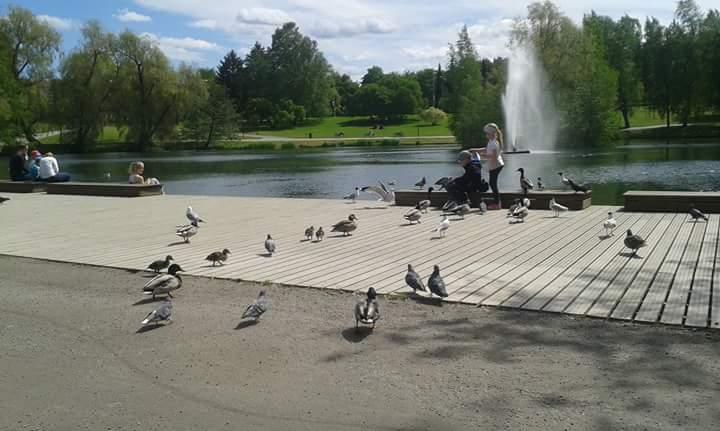 Tampere Talo'nun yanında bulunan Ördek Parkı
