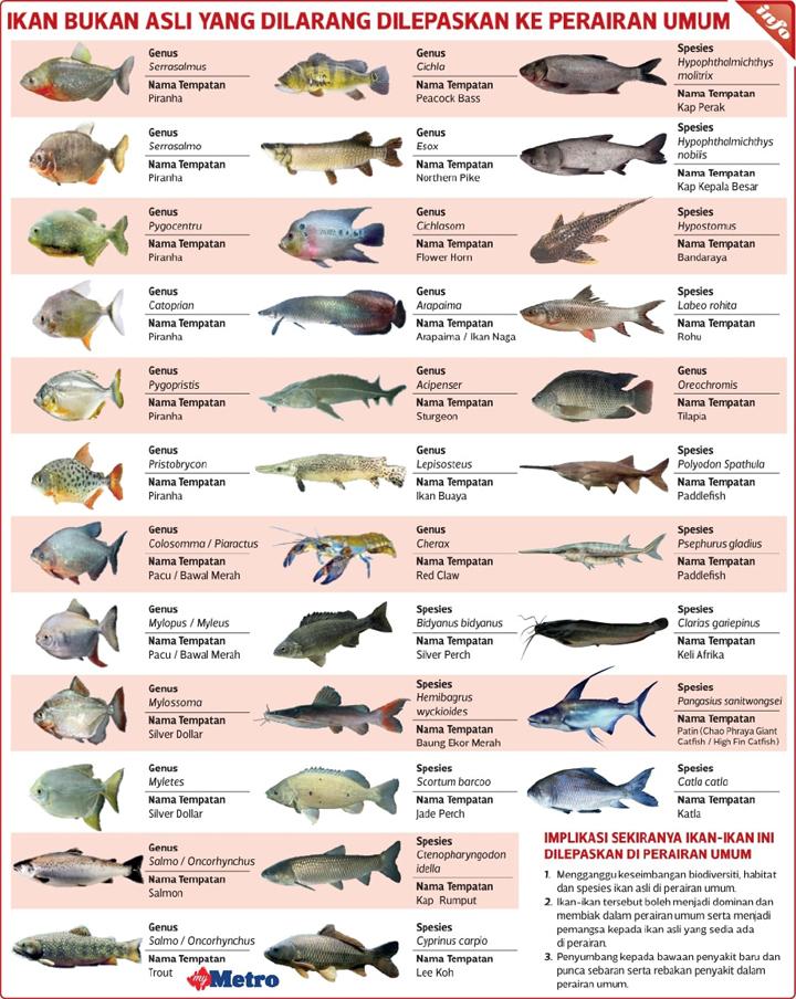 Kap dan Tilapia Ikan Dilarang di Malaysia