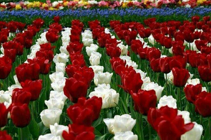 تفسير حلم رؤية الورد والزهور في المنام لابن سيرين
