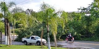 O vento derrubou uma arvore em frente ao hospital de Sete Barras, bloqueando parcialmente a SP-139