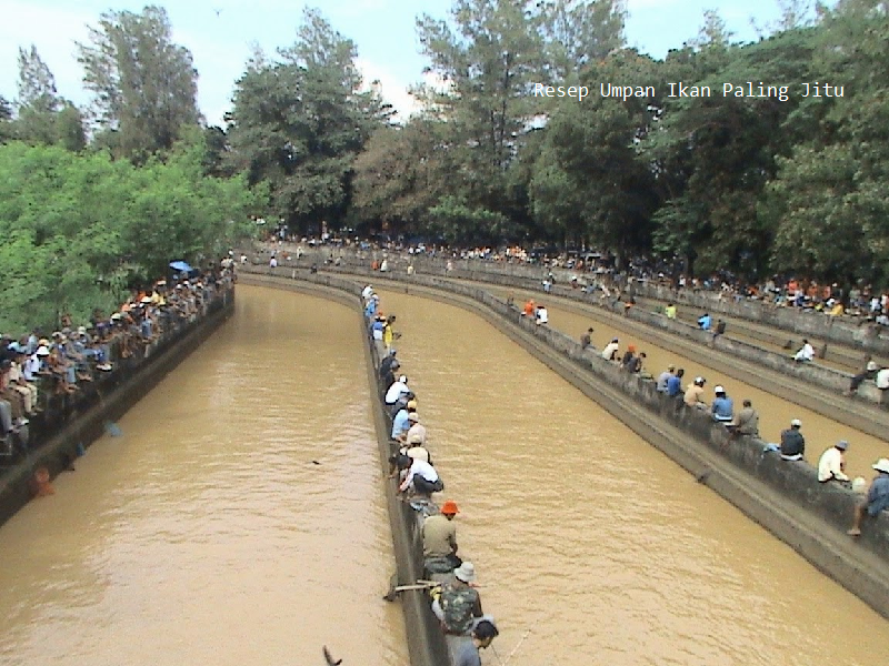 Pengen Mancing Ikan Patin Kolam Harian Ini Dia Umpan Alami Paling Manjur