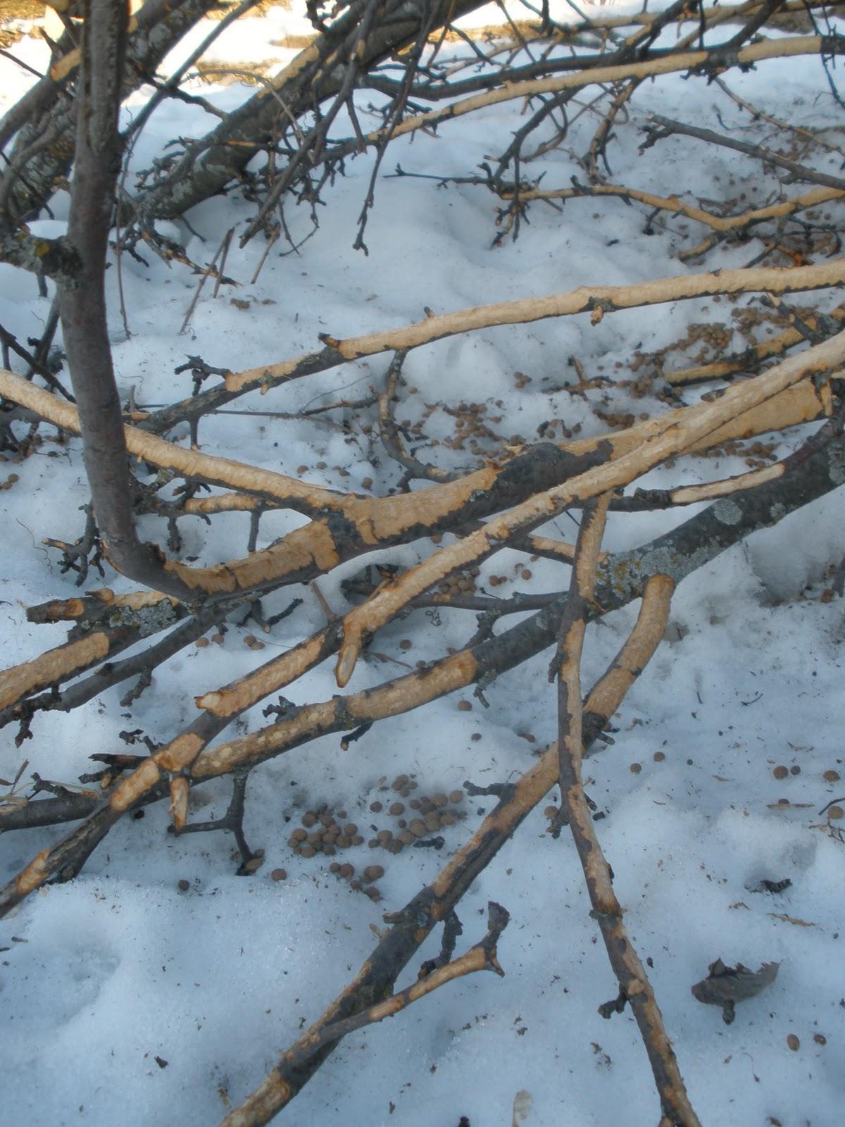 Harvest Moon By Hand Outdoor Hour Challenge Winter