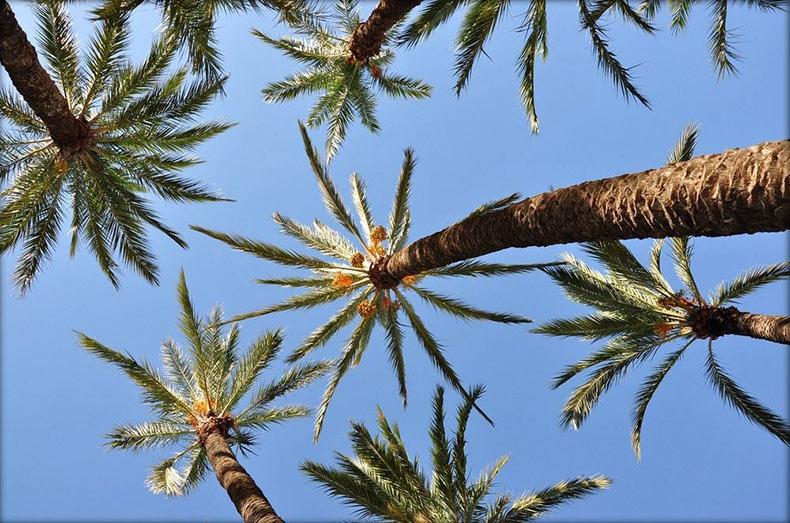 Elche, la ciudad de las palmeras | España
