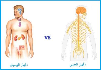 الجهاز العصبى والجهاز الهرمونى