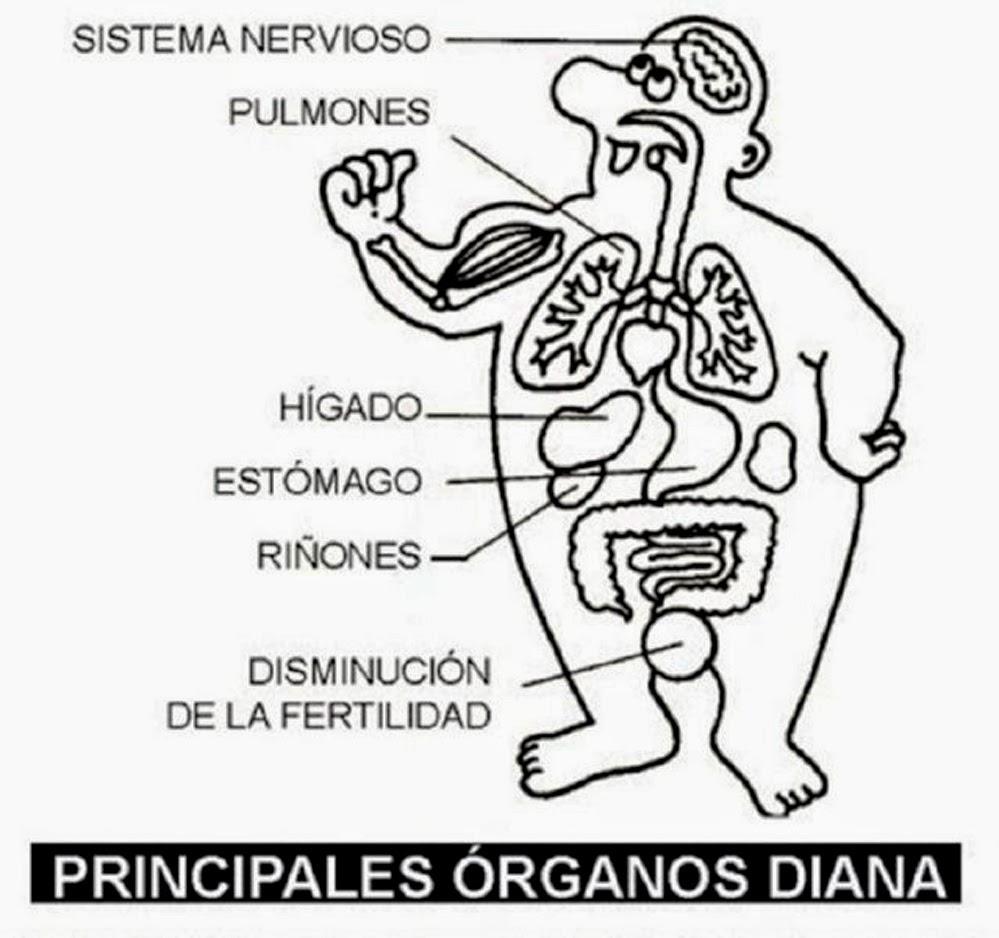Increíble Blanco Contorno Del Cuerpo Humano Molde - Anatomía de Las ...