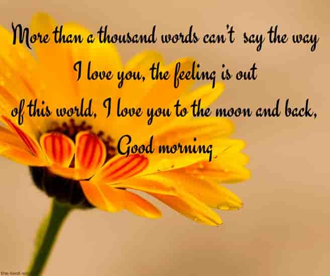 good morning love letter to gf with sunflower