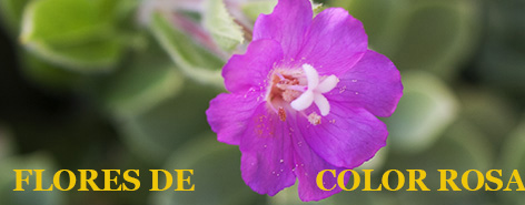 Flores Silvestres De Color Rosa