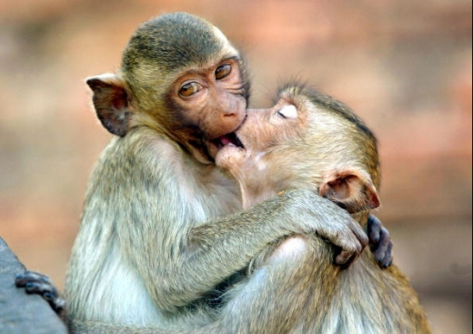 Funny monkey kissing new nice images and wallpapers 2013 for New nice images