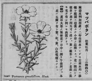 FLOS, 花, BLUME, FLOWER, 華,FLEUR, FLOR, ЦBETOK, FIORE