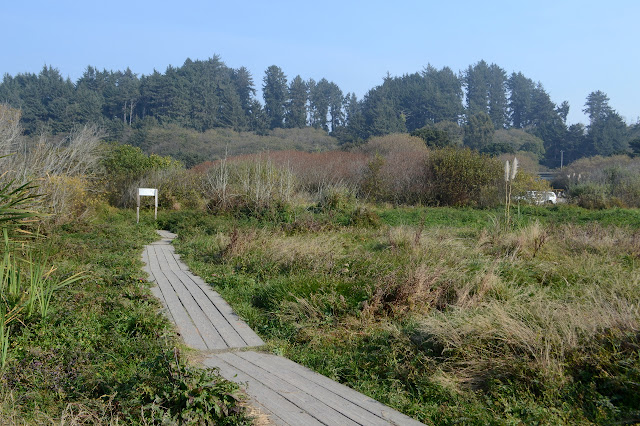 boardwalk over moist bit