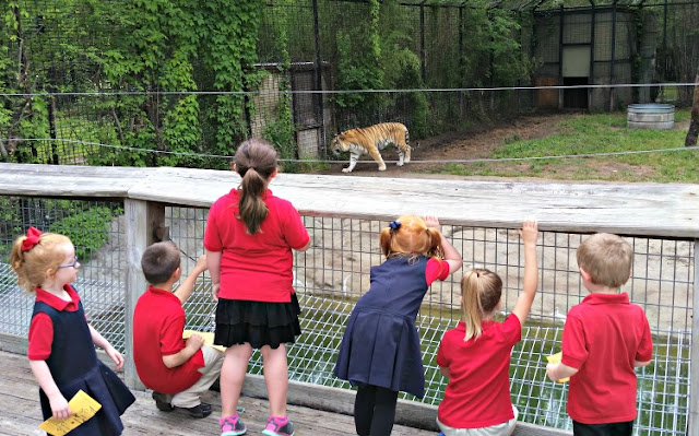 zoo animals and kids
