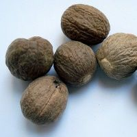 Rujahari Oil Ingredient - Nutmeg