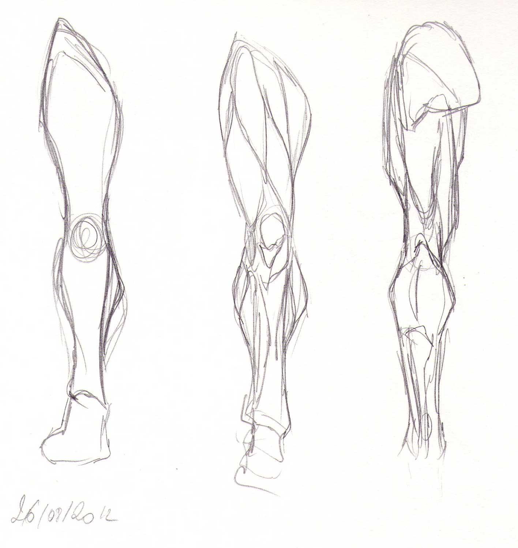 Blog de Claire Matz  Croquis - Muscles du bras et de la jambe 8e9fc8f1570