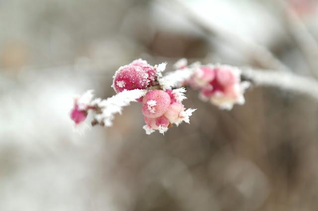 Macrofotografie winter ijskristallen