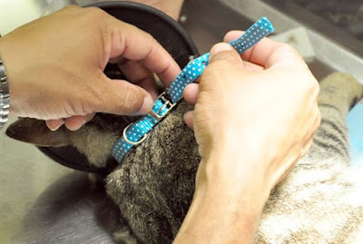 Designer Cat Collars : Give Style To Your Cat!