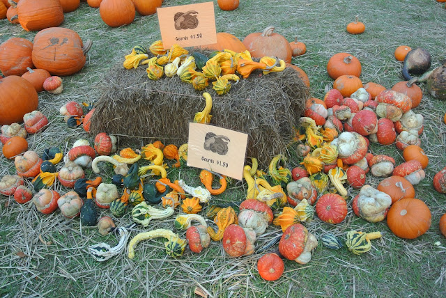 Pumpkin Patch, Jacksonville, Florida