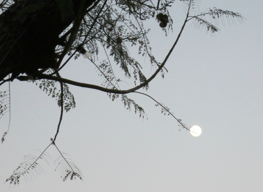 a tree with a day moon