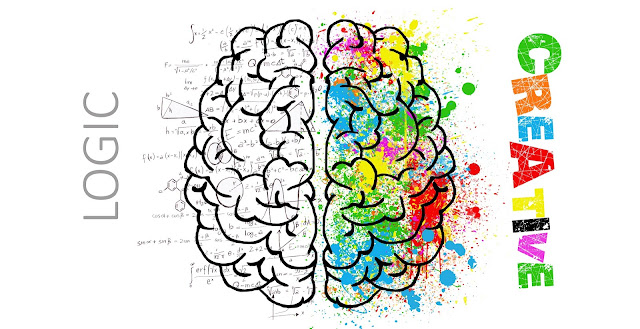 Learn more about the structure of the brain