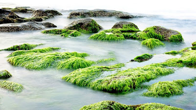 superfood seaweed