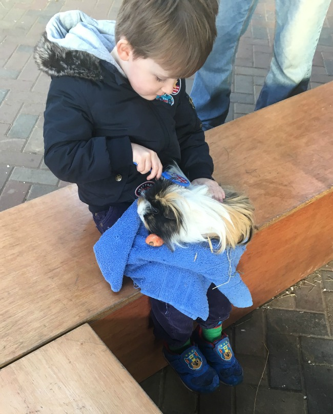 Our-Weekly-Review-Cefn-Mably-Farm-Park-and-a-Horse-Ride-boy-brushing-guinae-pig