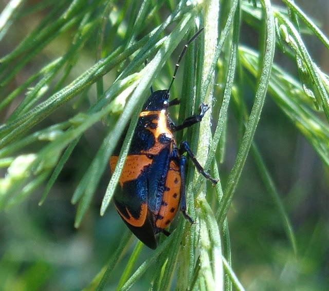 Unidentified Bug, Long Key Nature Center