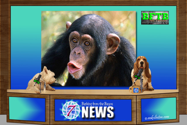 BFTB NETWoof News on animal intelligence