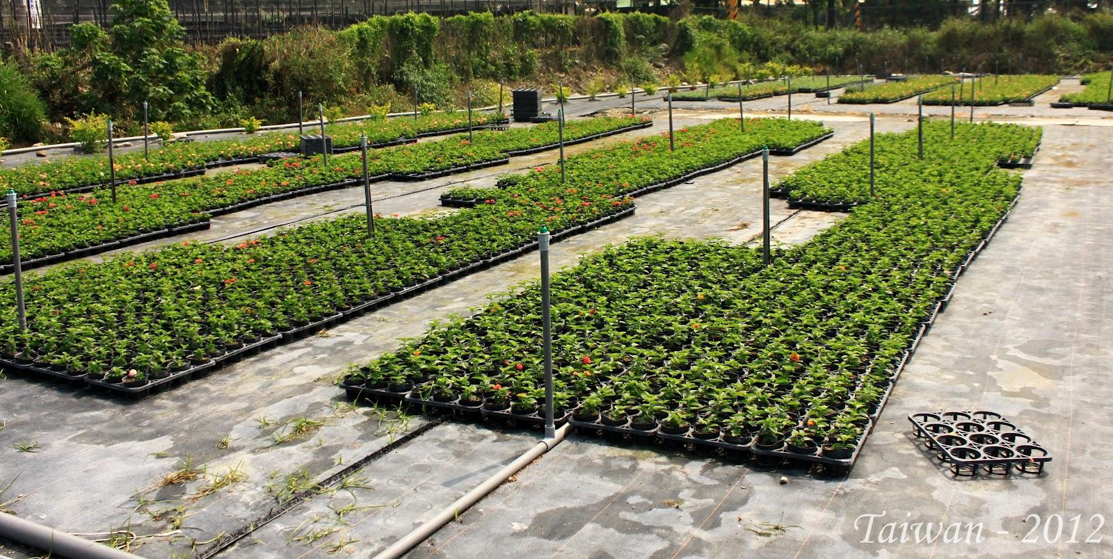Estudiando agricultura en taiw n un vivero de plantas de for Viveros ornamentales