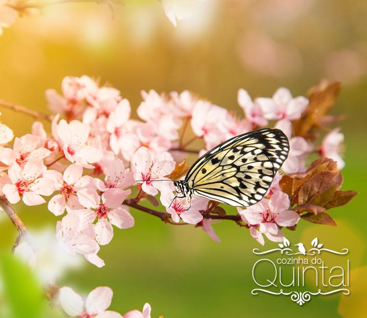 Flor de Cerejeira, imagem original Shutterstock, todos os direitos reservados.