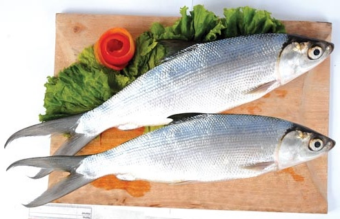 Manfaat Ikan Bandeng Untuk Anak