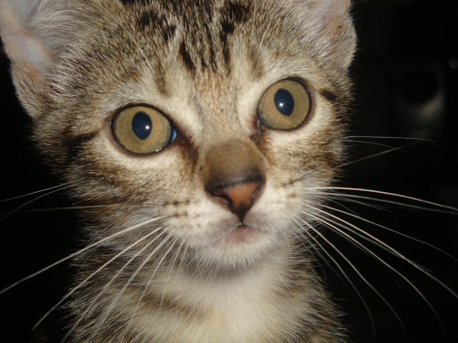 Infecção urinária em gatos - Confira os sintomas no Bichano... (2/3)