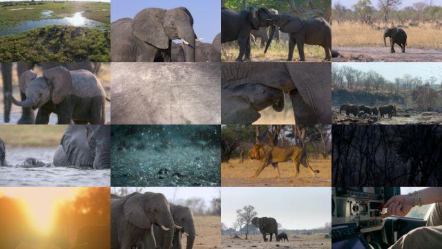 Elephant [Los Elefantes] (2020) HD 1080p Latino Dual