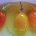 How to Tell If Your Eggs Came From a Sick or Healthy Chicken