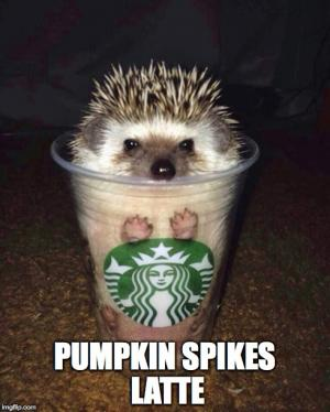pumpkin%2Bspikes%2Blatte%2Bfunny%2Bspice%2Bmeme%2Bfall%2Bautumn hilariously counting down to autumn pumpkin spice funnies