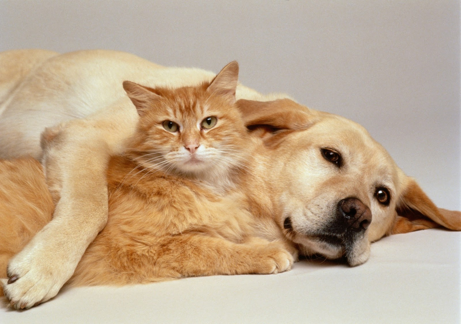 """pets n more: the """"early death trap"""" millions of pet owners"""