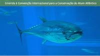 Emenda a Convenção de Proteção do Atum