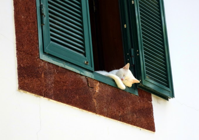 the cat sleeps peacefully in a city window