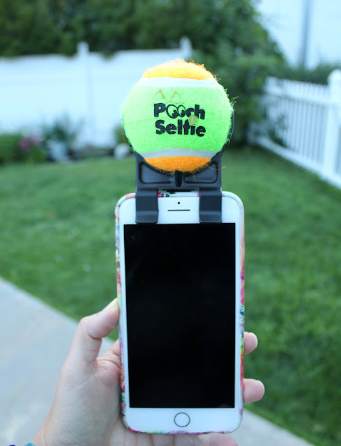 pooch selfie attached to a smartphone