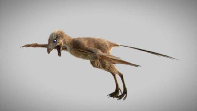 """Hallan fósil de un dinosaurio """"murciélago"""" de 163 millones de años"""