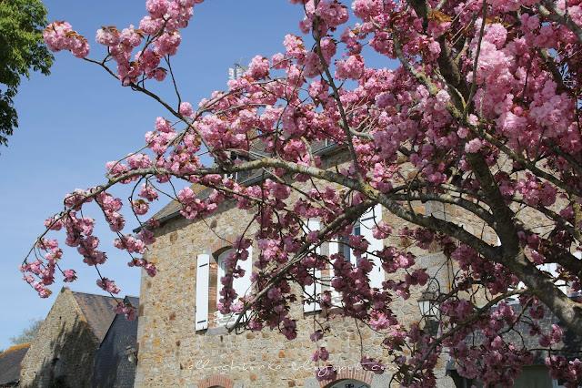 Normandia wiosną