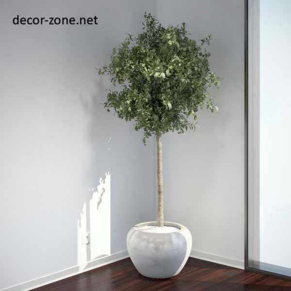 Large Indoor Plants Ideas Make A Green Corner