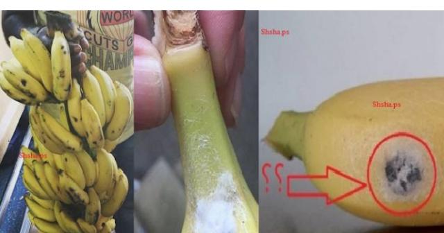 احذروا هذا الموز... يُنهي حياتكم خلال ساعتين! راقبوا الموز لديكم وقارنوه بهذا النوع..