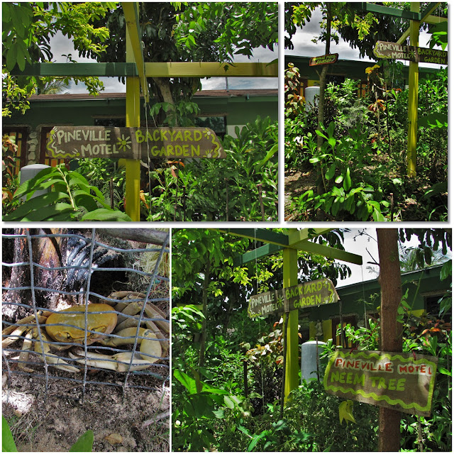 Lush island garden greenery, with wooden picket signs labeling the plants.