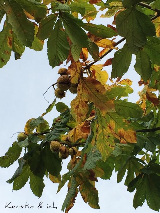 Herbst kastanien