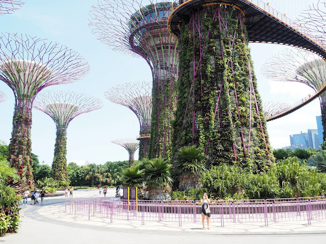 Gardens by the bay - Supertree Grove