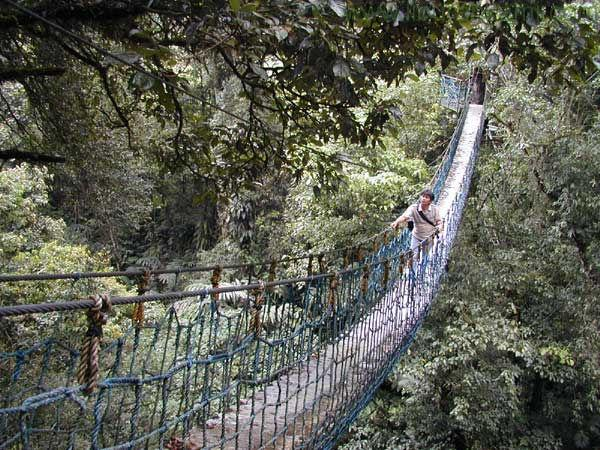 Lima Hutan Terbaik yang Ada di Indonesia