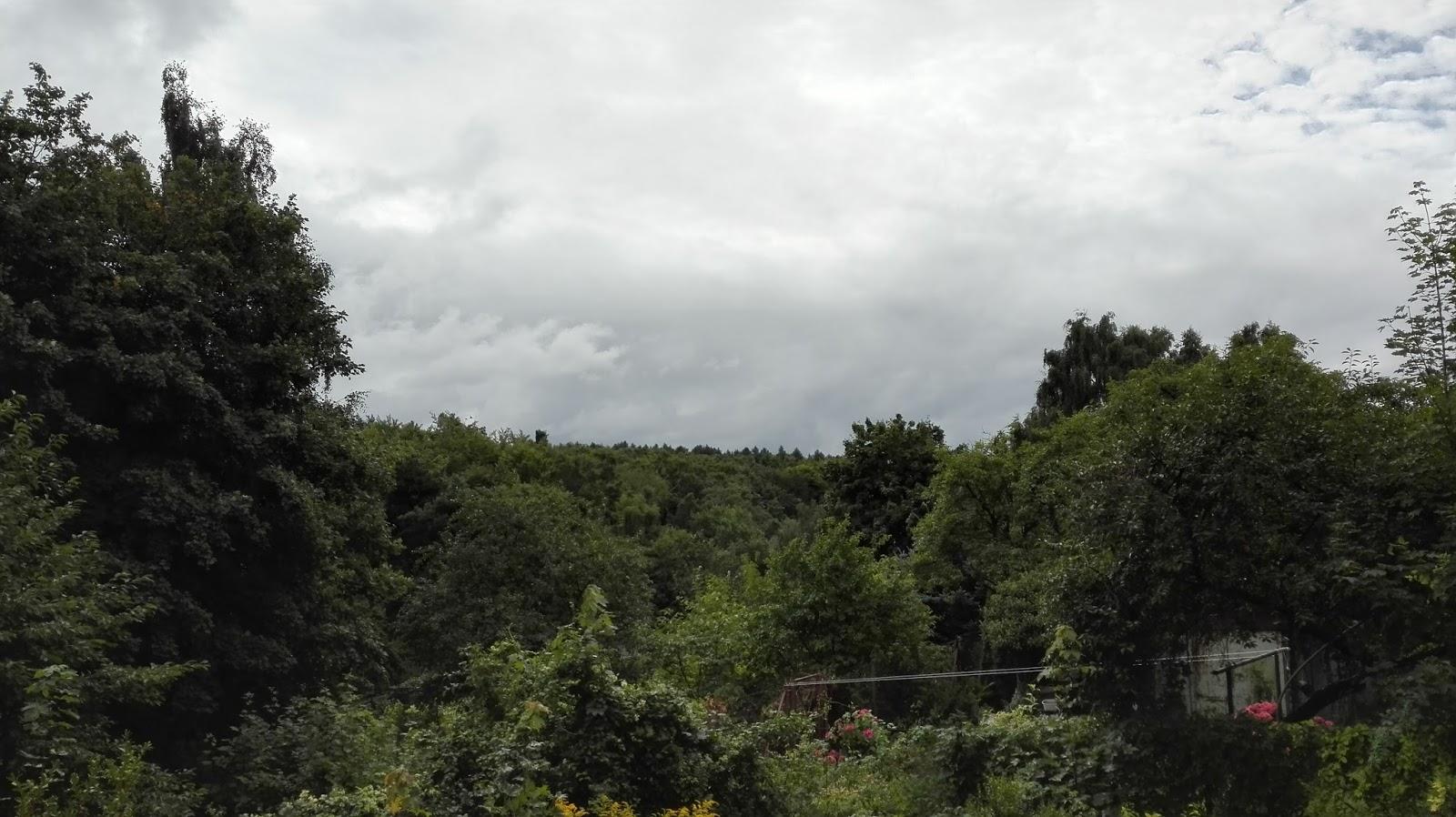 Letni las oraz działki