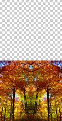 Merubah-Foto-Menjadi-Gambar-Pola-Abstrak-Di-Photoshop-4