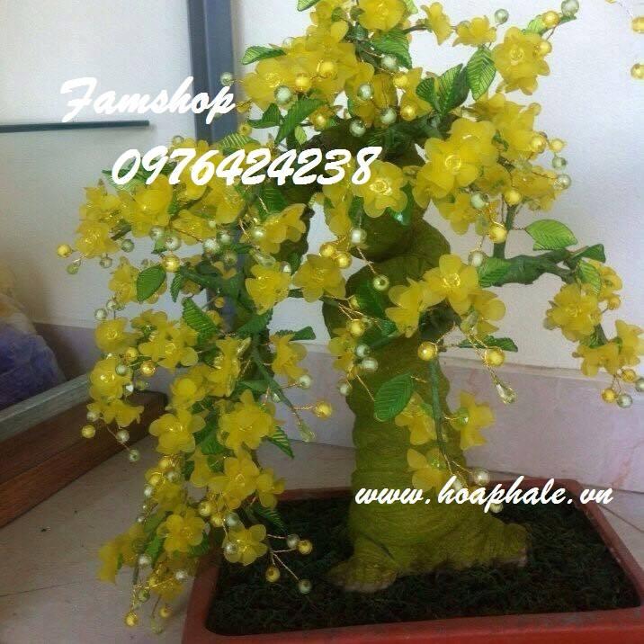 Goc bonsai mai dao tai Quan Hoa