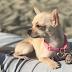 Io & Zoe, la vita con un chihuahua: Alimentazione #1